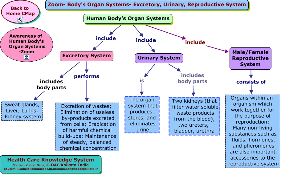 Body Systems Concept Map Zoom bodys Organ Systems