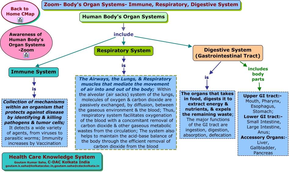 Zoom-Body's Organ Systems-Immune-Respiratory-Digestive ...